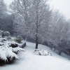 How To Care For Your Winter Garden
