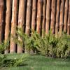 Low Maintenance Landscape Design Tips To Compliment Your Home